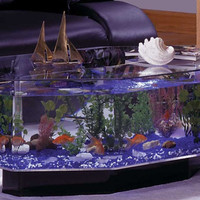 Fish Aqua Coffee Table Aquarium