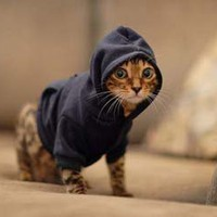 Amazon.com: pet hoodie