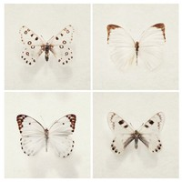 Butterfly Photos - Wings - Nature Photography , Four 5x5 fine art prints in neutral beige and brown, Winter White