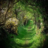 Simply Magical / The Round Road in Ireland.//THIS IS BEAUTIFUL!