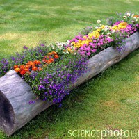 Garden Inspirations / Log Planter - use a hollowed out log or stump as a planter