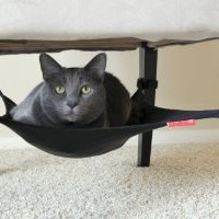 Amazon.com: Cat Crib - BLACK: Pet Supplies