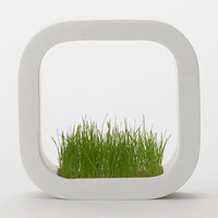Factory Planter by Chiaki Murata for Metaphys - Free Shipping