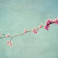 spring blossoms, fine art photography