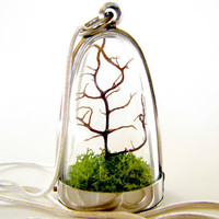 Free US Shipping Modern Tree and Moss Terrarium by TinyTerrains