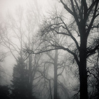Perfect Foggy Morning Moody Forest Black and White by TerraVision