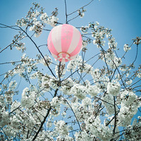$20.00 Chinese Lanterns for Cherry Blossom time by Debbsga on Etsy