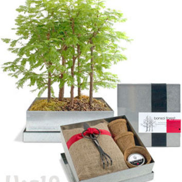 Grow your Own Bonsai Forest Kit: Dawn Redwood