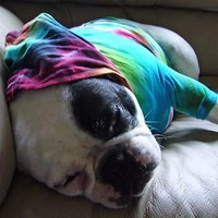 Dog Tie Dye HoodieT Shirt French Bulldog Pug Rainbow -Carla Smale-BobbysBears