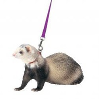 Marshall Harness Lead Set for Ferrets Purple | z