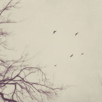 winter, birds, flying, nature, fine art photography