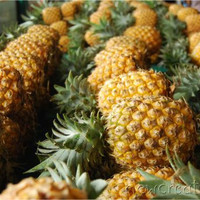 Pineapple printable photo 8x10 Food photography kitchen art