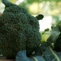 Organic Broccoli Seeds De Cicco by cubits on Etsy