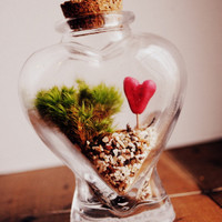 The Bleeding Heart Terrarium Special Edition