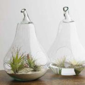 Recycled Glass Terrarium