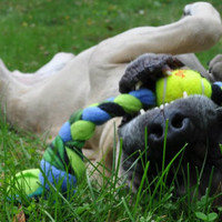 Safer, Earth-Friendly Pet Toys