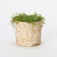 Birch Cylinder Pots