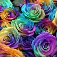 Rainbow Roses | Flickr