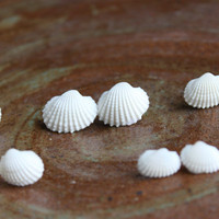 Ocean Flower - White Real Seashell Stud Earrings
