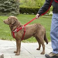 Dog Training Harness / Walk In Sync™ Walking and Training System -- Orvis