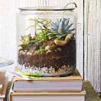 Cookie Jar Tabletop Garden – Lowe's Creative Ideas - Lowe's Creative Ideas