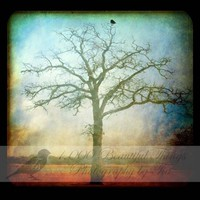 SALE 15 off Perched ttv Fine Art Print by 1000beautifulthings