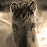 A Horse With No Name by FairchildPhotography on Etsy