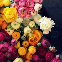 """Loads of Ranunculus"" 16x24 Photograph by SweetEventide"