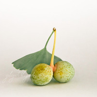 Ginkgo Fruit  whimsical photograph romantic by GoldenSection