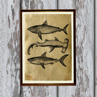 Antique sharks print animal art Old paper home decor 8.3 x 11.7 inches