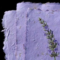 6 Plantable Paper Sheets Lavender by recycledideas on Etsy
