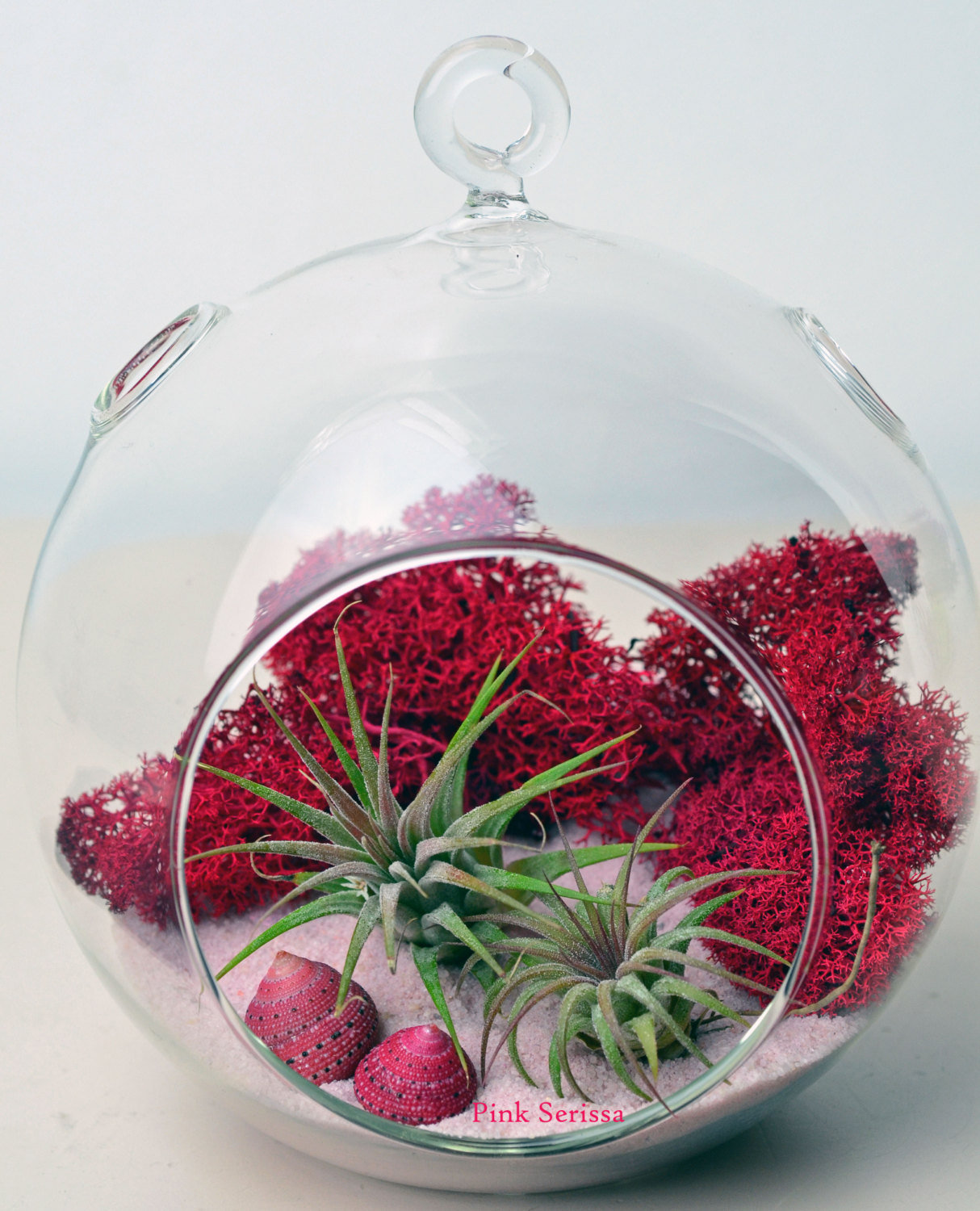 air plant terrarium hanging glass orb from pinkserissa on etsy. Black Bedroom Furniture Sets. Home Design Ideas