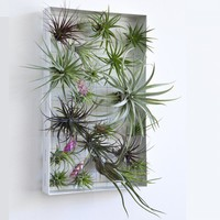 Airplant Frame - Web Shop - Flora Grubb Gardens