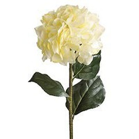 Product Details - Cream Hydrangea Stem