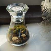 Live moss tea light terrarium kit by MissMossy on Etsy