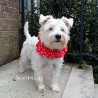 Red with White Stars Patriotic Dog Scrunchie Neck Ruffle