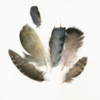 Found Feathers No 4 print of watercolor by amberalexander on Etsy