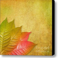 Autumn Leaves Stretched Canvas Print / Canvas Art By Viaina