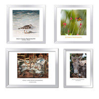 Photo set nursery decor 4 animal prints bird horse by ImagesByCW