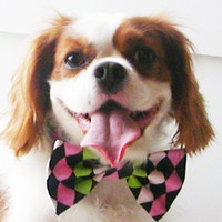 Dog Bow Tie Harlequin Dog or Cat green pink black by miascloset