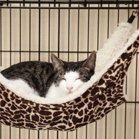 "Amazon.com: ProSelect Wild Time Black & Brown Animal Print Fashion Faux Fleece Wool Cat Ferret Cage Hammock Bed 21""L x 12 1/2""W: Pet Supplies"