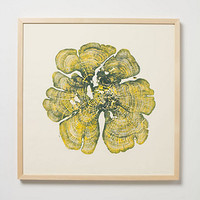 Woodcut Print, Yellow Cedar