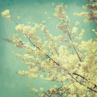 Flower Photograph Blossoms Spring Tree by EyePoetryPhotography