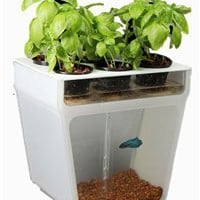 AquaFarm- A Beautifully Simple & Closed-Loop Ecosystem Right on Your Table