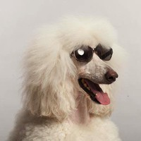 Mabel - Sunglasses for dogs by Warby Barber - lolobu.com