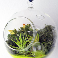 Air Plant Terrarium // Hanging Glass Orb // Tillandsia Ionantha // Green Sand //  reindeer moss // dried flowers // Indoor Garden