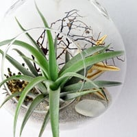 Air Plant Terrarium - Hanging Glass Orb - Beach Terrarium - Sea Fan - Sea Star - Sea Urchin - White Sand - Home and Living - Indoor Garden