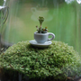 green tea with lichen moss terrarium