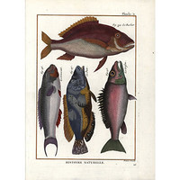 One Kings Lane - A Vintage Marine Mood - 1770s Fish Print
