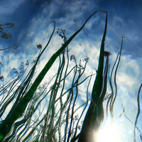 Talking Reeds Photograph by Tammy Wetzel - Talking Reeds Fine Art Prints and Posters for Sale